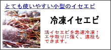 石鯛冷凍イセエビ
