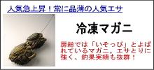 石鯛冷凍マガニ