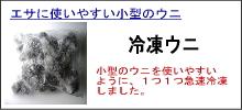 石鯛冷凍ウニ